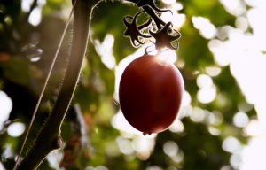 A photo of a tomato from CEO Dick Boer's opening presentation