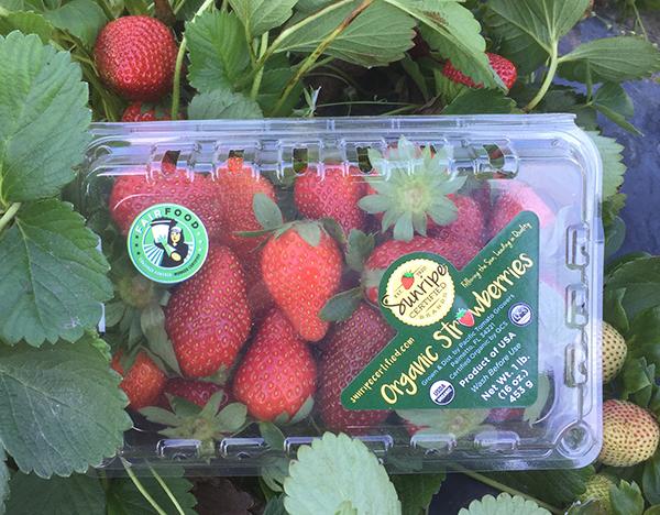 Sunripe_Strawberries_Label_1_600